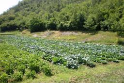 Земельный участок в Грахово – Никшич, площадью 5500м2. в Которе
