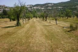 Земельный участок в Грахово – Никшич, площадью 5600м2. в Которе