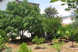 Территория. Черногория, Добра Вода : Уютный дом с зеленым садом наделко от пляжа, 4 спальни, 3 ванные комнаты, барбекю, парковка
