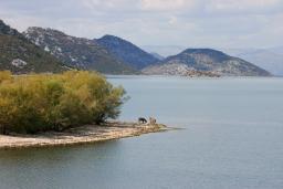 Скадарское Озеро     : Черногория