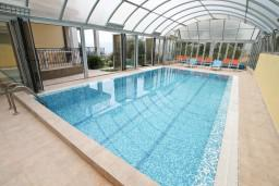 Swimming pool. Montenegro, Kavac : Villa with 4 bedrooms in Kavac for 10 guests