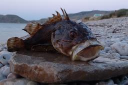 Рыбалка на Будванской ривьере : Черногория