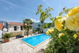Бассейн. Черногория, Столив : Прекрасная вилла в 100 метрах от пляжа, с бассейном и двориком с барбекю, 4 спальни, 2 ванные комнаты, патио, парковка, Wi-Fi