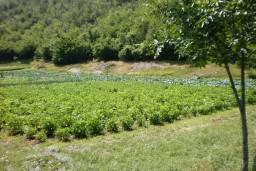 Земельный участок в Грахово – Никшич, площадью 4000м2. в Которе
